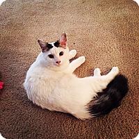 Adopt A Pet :: Deuce - Chattanooga, TN