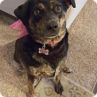 Adopt A Pet :: Jewels - Austin, TX