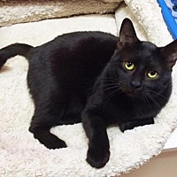 Adopt A Pet :: Jesse - Chino Hills, CA