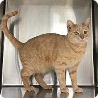 Adopt A Pet :: Elsa (Sunny) - Siler City, NC
