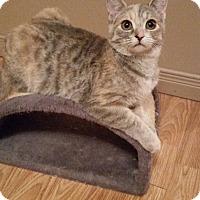 Adopt A Pet :: Roxy - Bainsville, ON