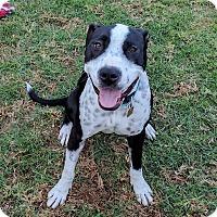 Adopt A Pet :: Pepper (female) - Yorba Linda, CA