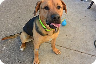 Mixed Breed (Large) Mix Dog for adoption in Meridian, Idaho - Bear