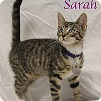 Adopt A Pet :: Sarah - Bradenton, FL