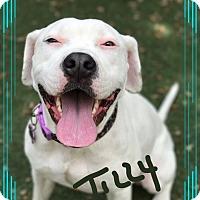Adopt A Pet :: Tilly - Palm Bay, FL