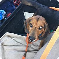 Adopt A Pet :: Tucker - Shelter Island, NY