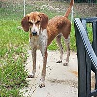 Adopt A Pet :: COONER - Ocean Springs, MS