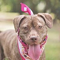 Adopt A Pet :: Julie - Tomball, TX