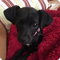 Adopt A Pet :: Olive - Santa Ana, CA