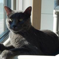 Adopt A Pet :: Chauncey - Monroe, WI