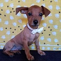 Adopt A Pet :: Dundee - Troutville, VA