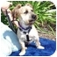 Photo 2 - Lhasa Apso/Skye Terrier Mix Dog for adoption in Culver City, California - Jeff