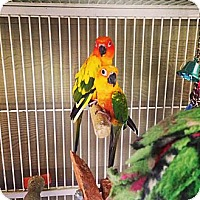Adopt A Pet :: Sunset and Zo - Burleson, TX