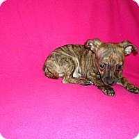 Adopt A Pet :: toby - Staunton, VA