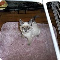 Adopt A Pet :: Lola - Modesto, CA