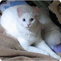 Adopt A Pet :: Snowball - Cincinnati, OH