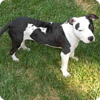 Adopt A Pet :: Molly Jane - Raleigh, NC