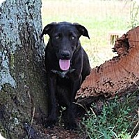 Adopt A Pet :: Destiny--Reduced fee to $300 - Allentown, PA