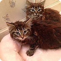 Adopt A Pet :: Genevieve - Sterling Hgts, MI