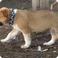 Adopt A Pet :: Ozzie - Saskatoon, SK