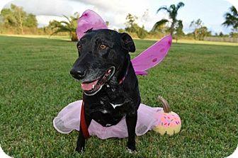 Labrador Retriever Mix Dog for adoption in Austin, Texas - Ruby
