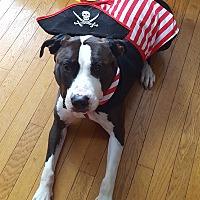 Adopt A Pet :: Hula - Frankfort, IL