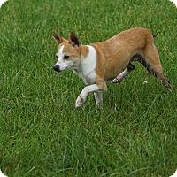 Adopt A Pet :: Chirp - Port Clinton, OH