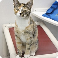 Adopt A Pet :: Star - Medfield, MA
