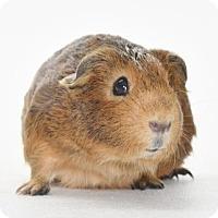 Adopt A Pet :: *Urgent* Aggie - Fullerton, CA