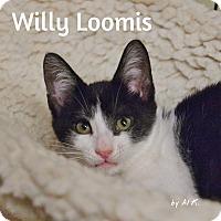 Adopt A Pet :: Willy_Loomis - Ocean City, NJ