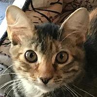 Adopt A Pet :: Marie - Auburn, CA