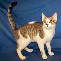 Adopt A Pet :: Dustin - Colorado Springs, CO