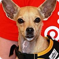 Adopt A Pet :: BatMan - Gilbert, AZ