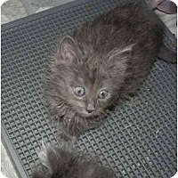Adopt A Pet :: Gem - Davis, CA