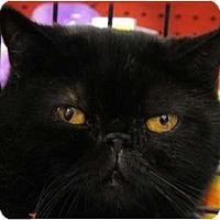 Adopt A Pet :: Brandy - Beverly Hills, CA