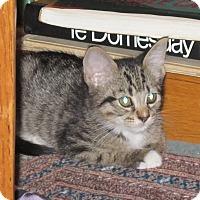 Adopt A Pet :: Marigold - Port Republic, MD