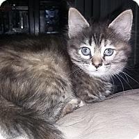 Adopt A Pet :: Ella - Whittier, CA