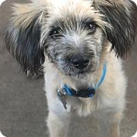 Adopt A Pet :: Wendover - MEET ME - Norwalk, CT
