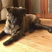 Adopt A Pet :: Sooner - Newport, MI