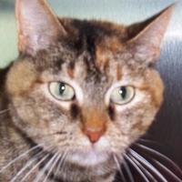 Adopt A Pet :: Crocus - Memphis, TN