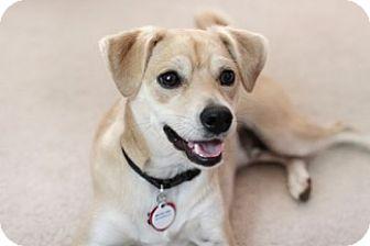 Terrier (Unknown Type, Medium) Mix Dog for adoption in Minneapolis, Minnesota - ***Courtesy Listing  -  MasonB