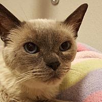 Adopt A Pet :: Sammi. - Grayslake, IL