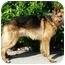Photo 4 - German Shepherd Dog Dog for adoption in Los Angeles, California - Heinz von Herzig