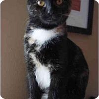 Adopt A Pet :: Ellen - Xenia, OH
