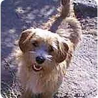 Adopt A Pet :: Wesley - dewey, AZ