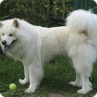 Adopt A Pet :: HARVEY - Dix Hills, NY