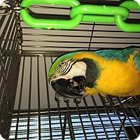 Adopt A Pet :: Marley - Punta Gorda, FL