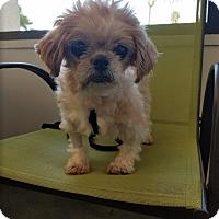 Adopt A Pet :: Mooshu Fortuna Wonder Dumpling - Vista, CA