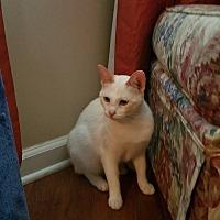 Adopt A Pet :: Bacon - Nashville, TN