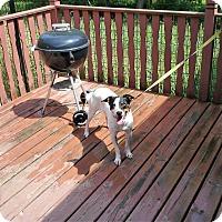 Adopt A Pet :: Jax - Wisconsin Dells, WI